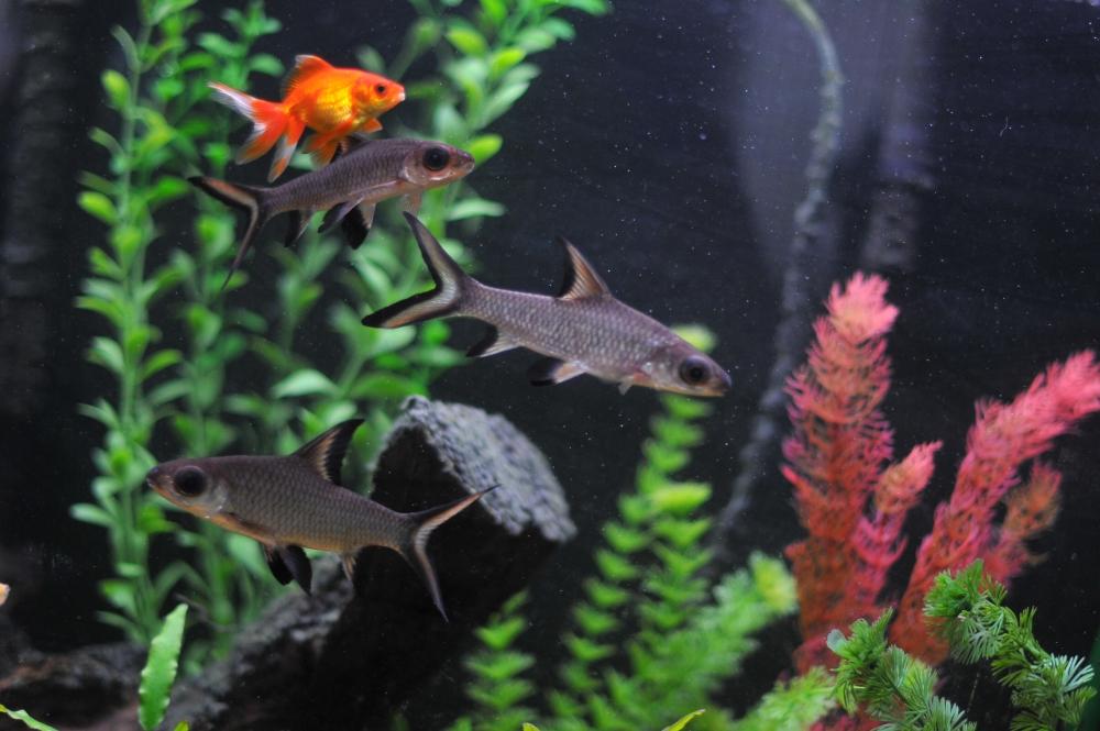 Совместимость аквариумных рыбок: виды, таблица