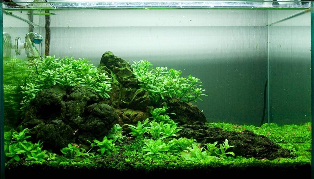 Травник - аквариум: фото, как сделать