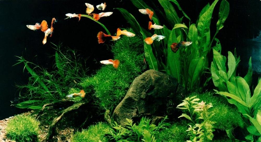 Оформление аквариума | aquariumok.ru
