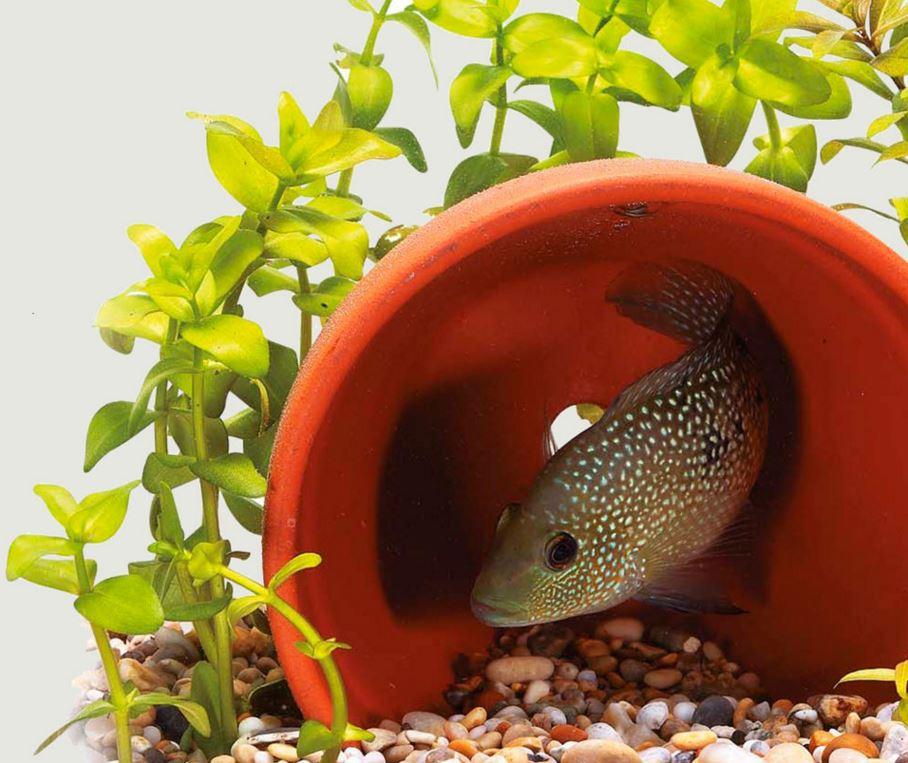 Совместимость аквариумных рыбок. Совместимость рыбок в аквариуме ...