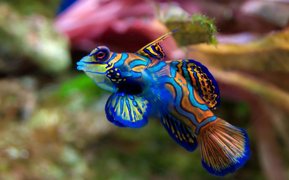 Бесплатно скачать / подводный мир / смешная рыбка - (1680x1050)