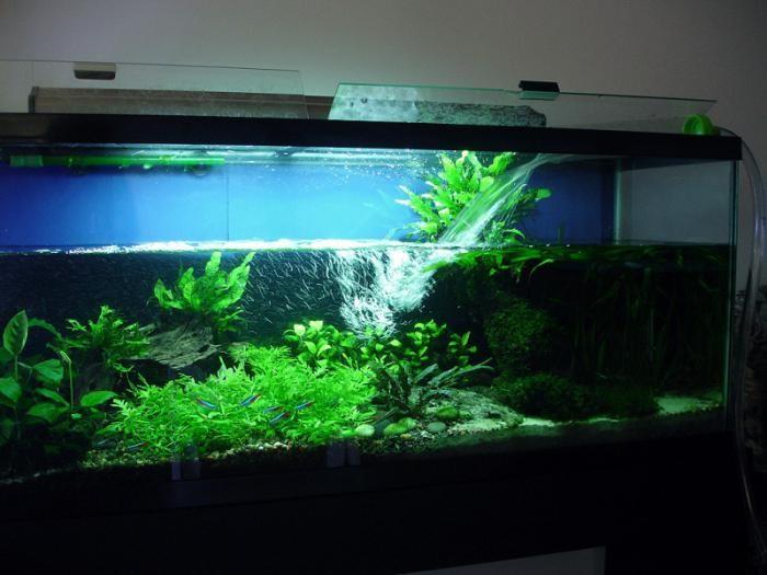 Подмена воды в аквариуме из под крана