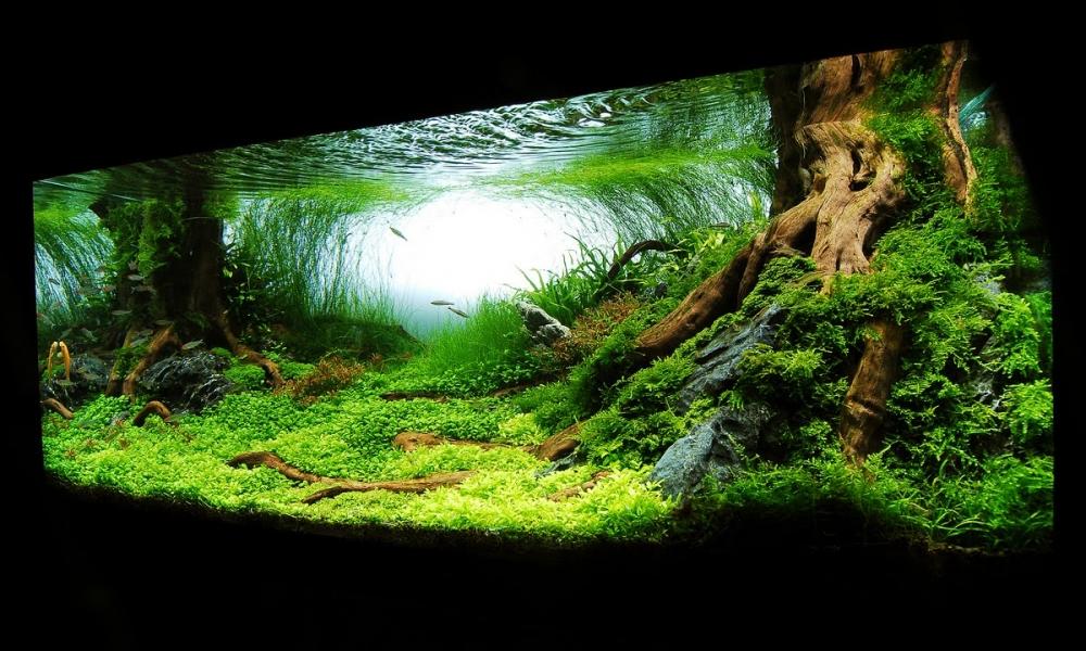 Необычайно красивый аквариум на 375 литров - YouTube