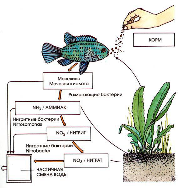 Как снизить уровень нитратов в воде - препараты для аквариума