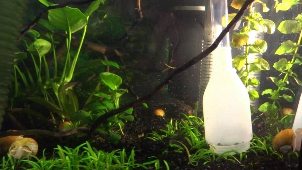 пользоваться сифоном для аквариума
