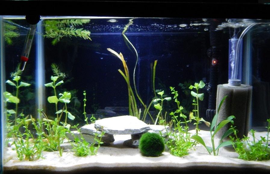 Как выбрать фильтр для аквариума - сравнение разных типов
