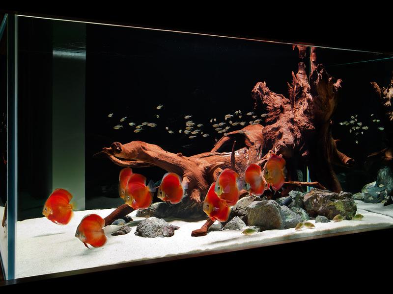 Подготовка воды для аквариума: сколько нужно отстаивать воду и как ...