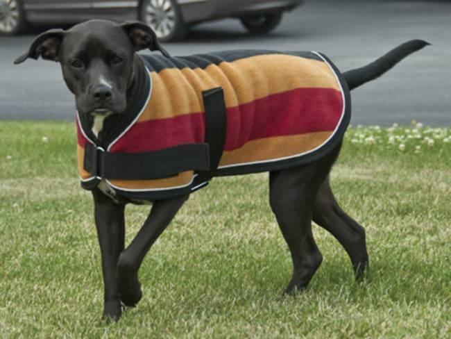 выкройки одежды для собак с размерами