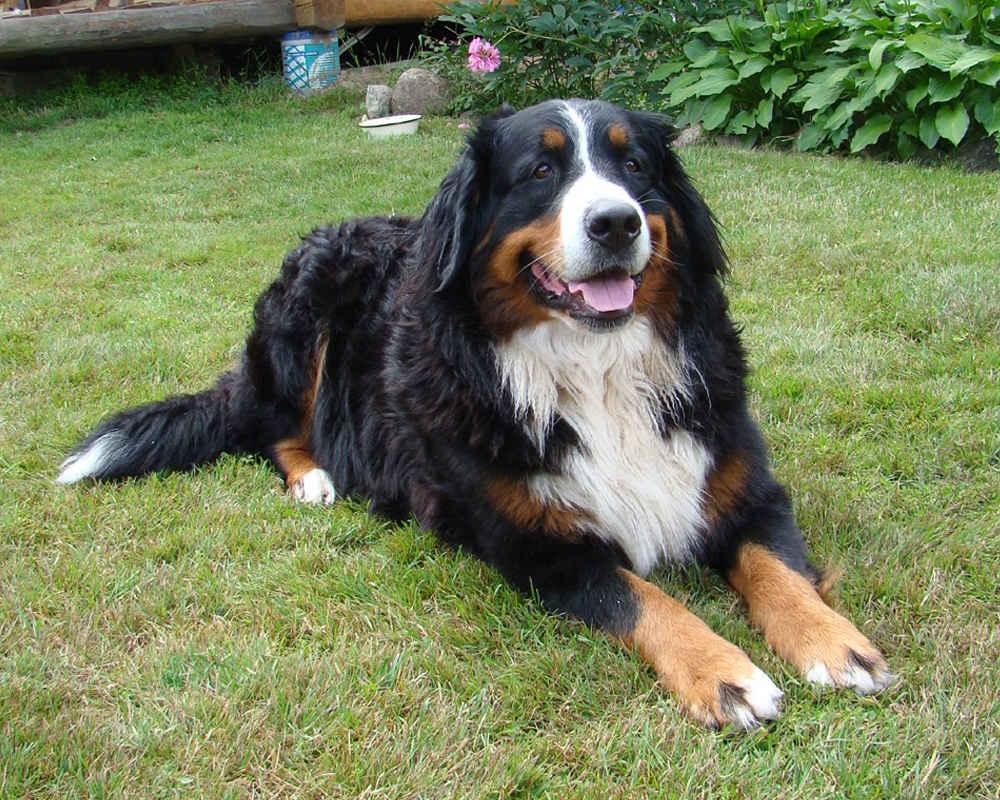 барон собака