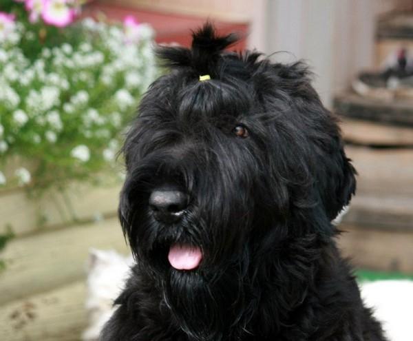 сталинская собака