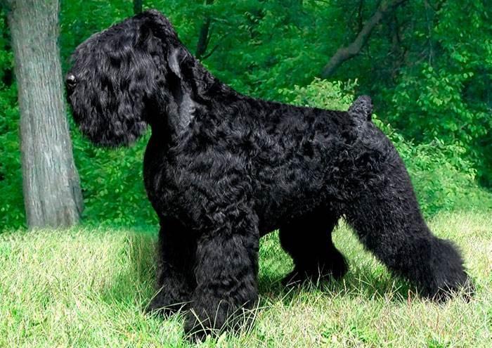 собака сталина фото
