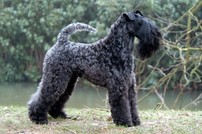гипоаллергенные породы собак с фотографиями и названиями