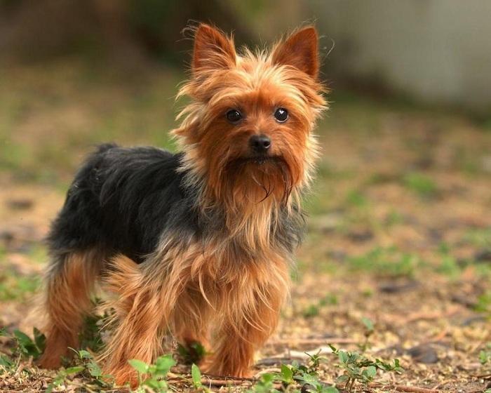 собаки не вызывающие аллергию у людей