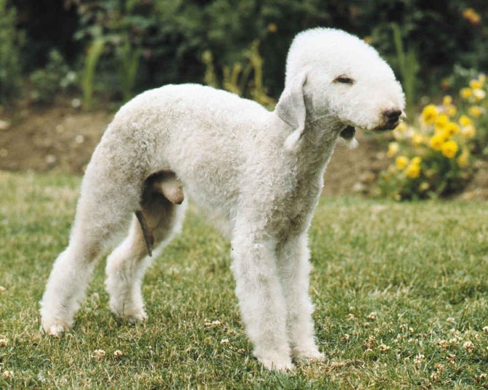 собака с человеческими волосами