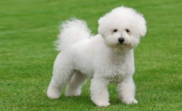 собаки без шерсти
