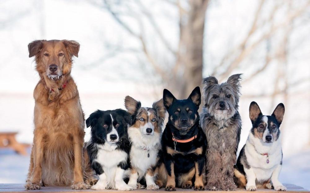 узнать породу собаки по фото