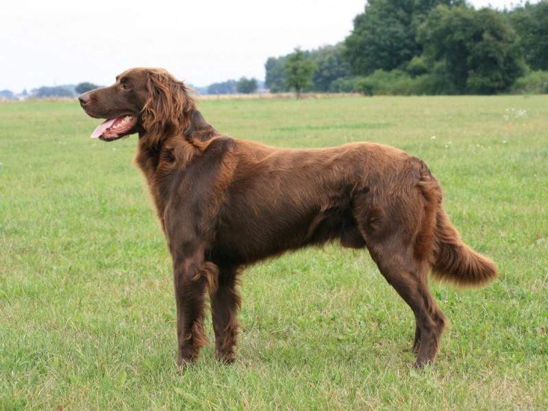 породы легавых собак с фотографиями и названиями