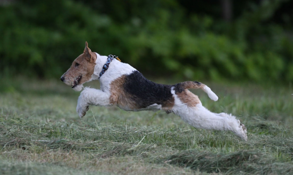 охотничьи собаки на птицу