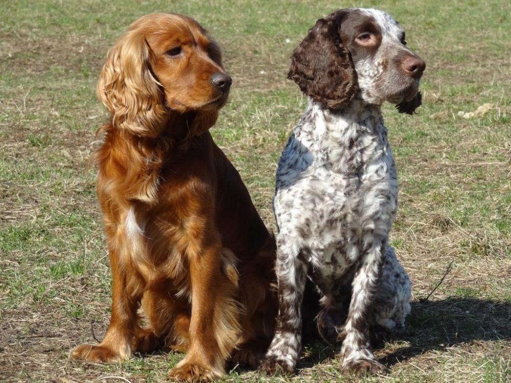породы охотничьих собак с фотографиями и названиями