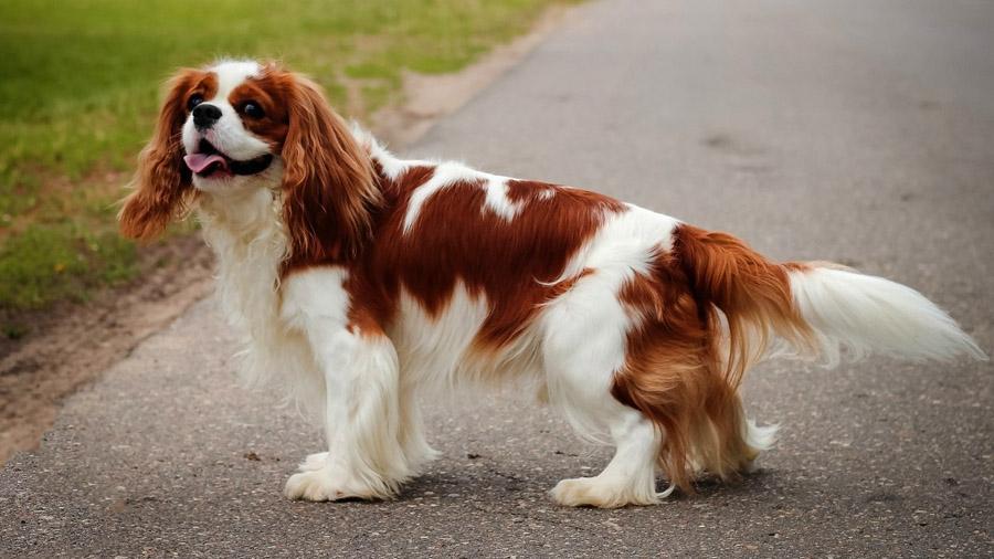 самые красивые собачки