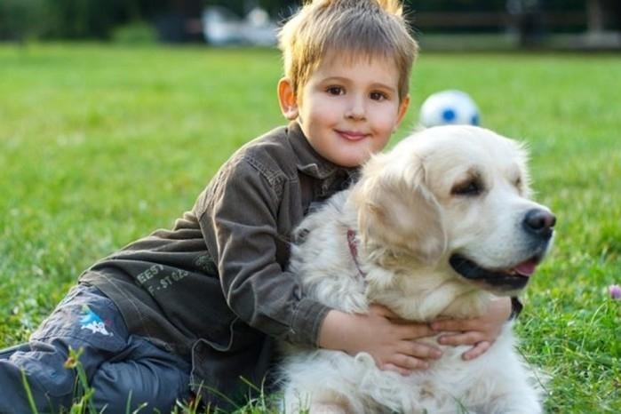 лучшая собака для семьи с детьми