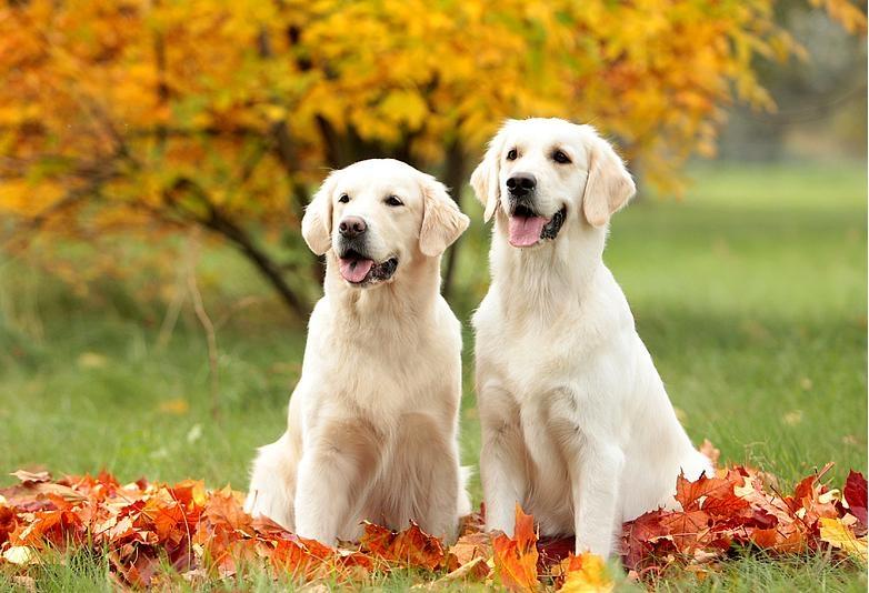 собаки среднего размера для квартиры