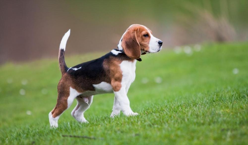 средние породы собак фото с названиями