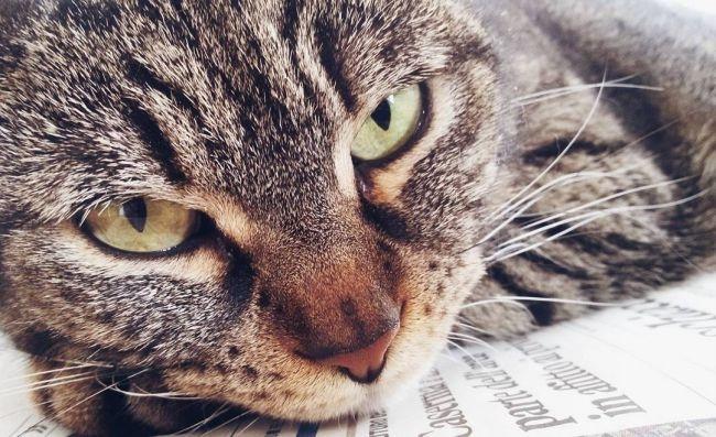 черные точки у кота