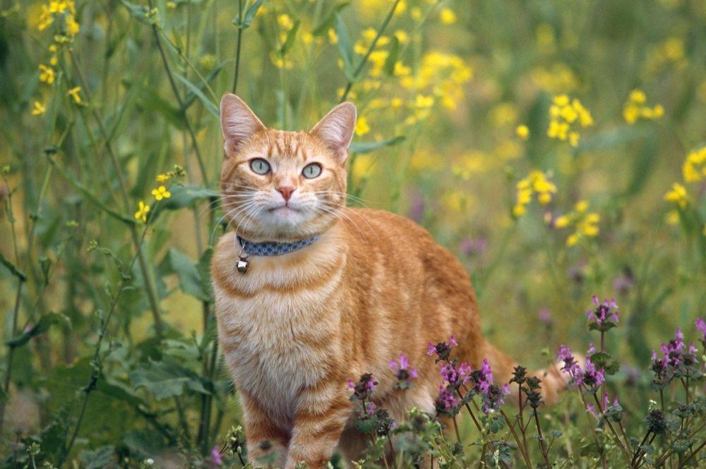 аллергия на еду у кошек