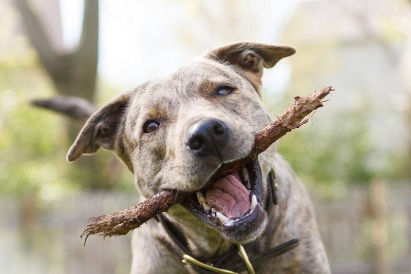 научить собаку приносить палку
