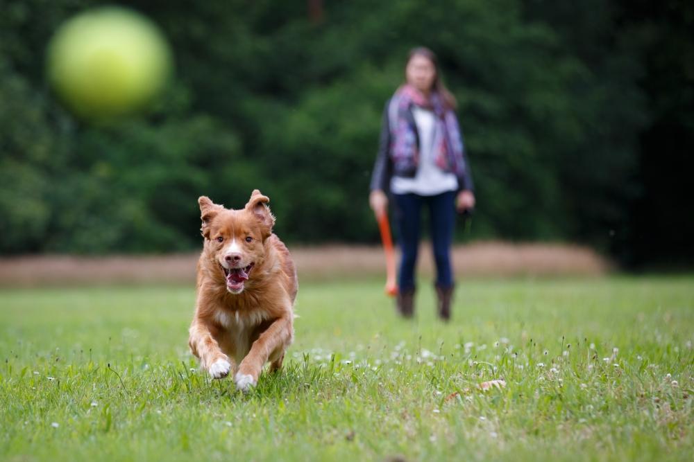 научить собаку команде апорт