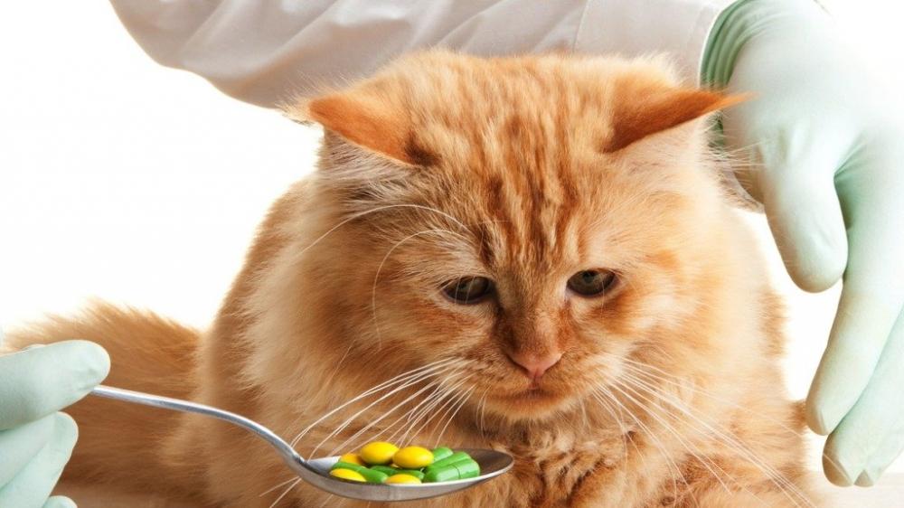 авитаминоз у кошек симптомы фото