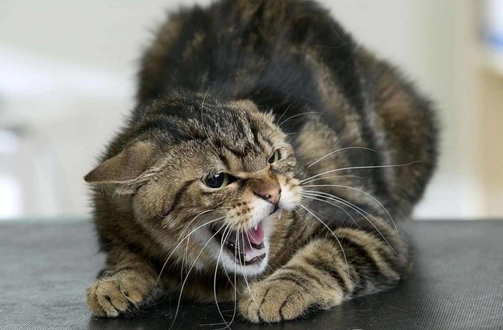 признаки бешенства у человека после царапины кошки