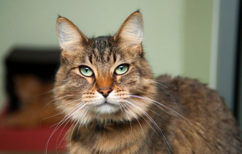 болезни кошек и их признаки