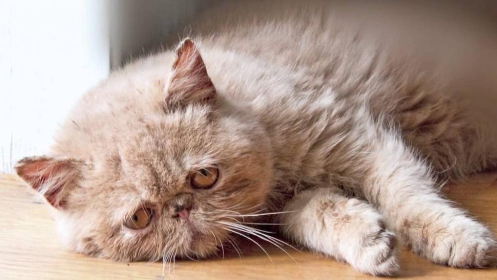 смертельные болезни кошек
