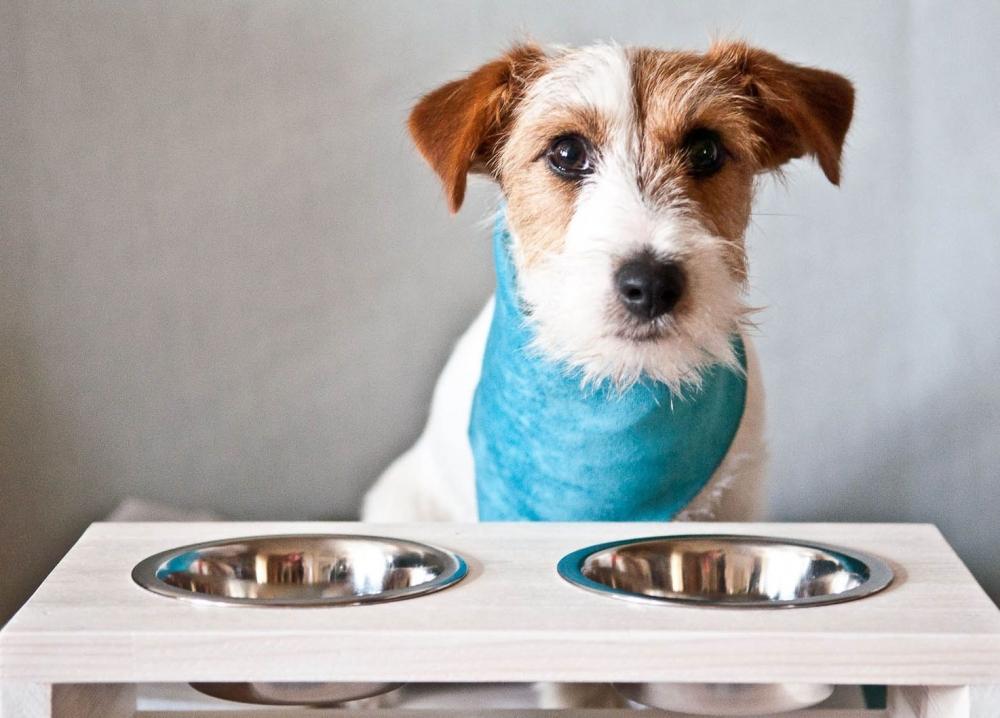 сколько раз кормить щенка в 4 месяца