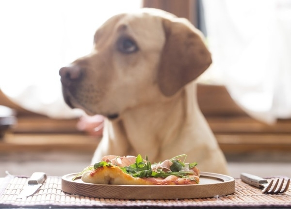 кормление собаки натуральной пищей рацион