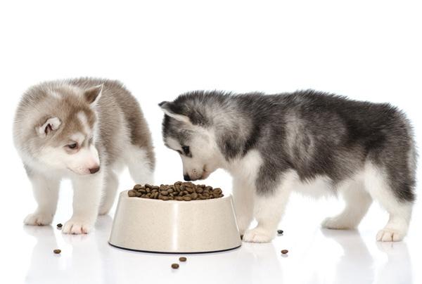 хаски размеры взрослой собаки