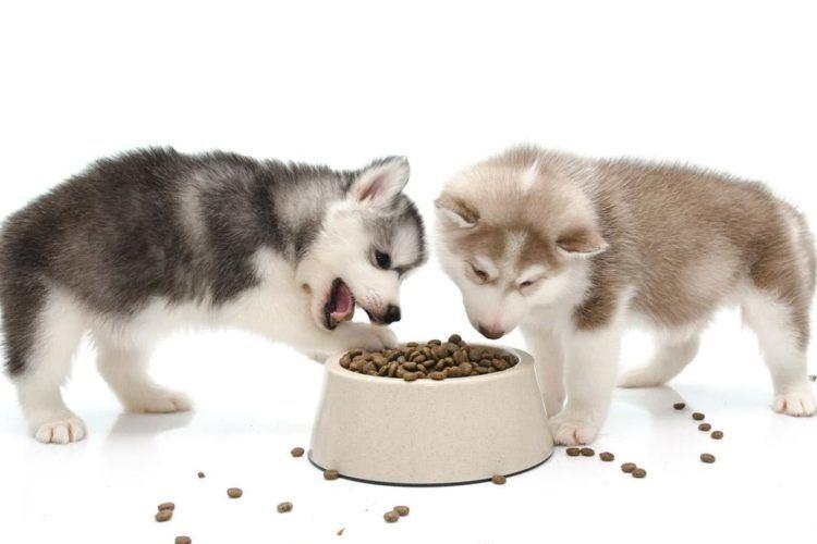 чем кормить щенка хаски 3 месяца
