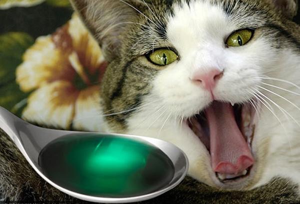 отравление у кошек симптомы и лечение