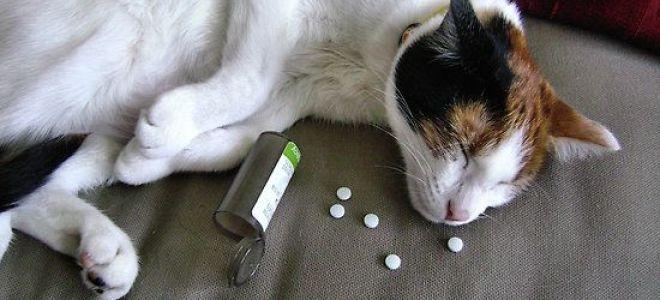 что дать коту при отравлении
