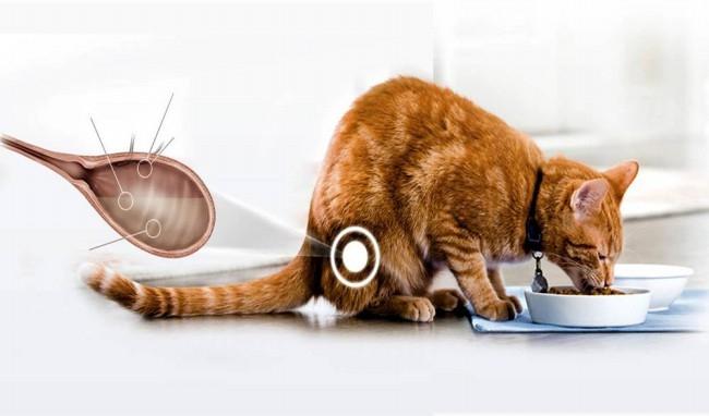 стоп цистит для котов