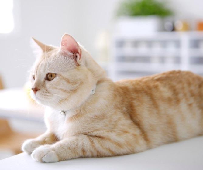 признаки сахарного диабета у кошек
