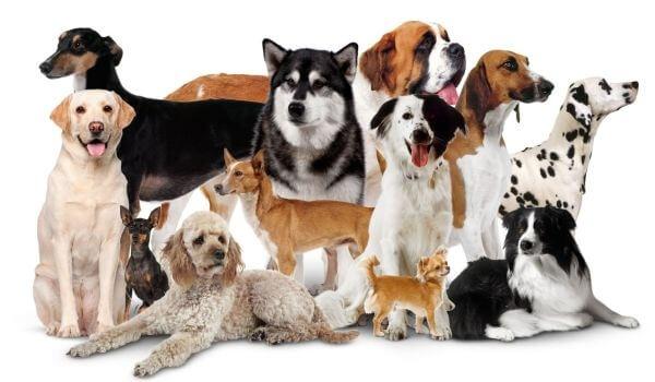 до какого возраста собака считается щенком
