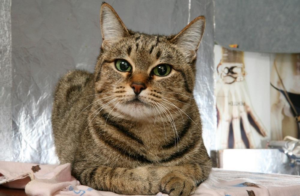 экзема у кошек симптомы и лечение