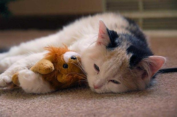 эозинофильная гранулема у кошек лечение