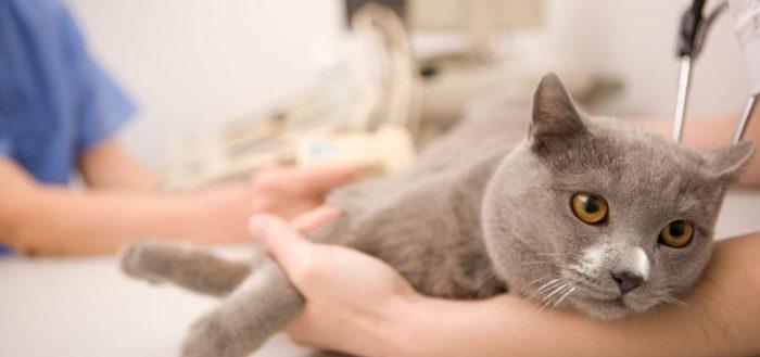 эпилепсия у кошек причины