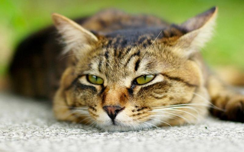 эпилепсия у кошек лечение как прекратить приступы