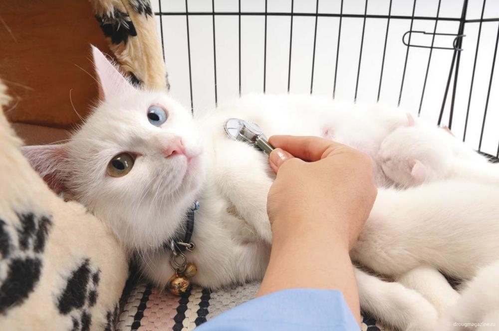 эпилептический припадок у кошки