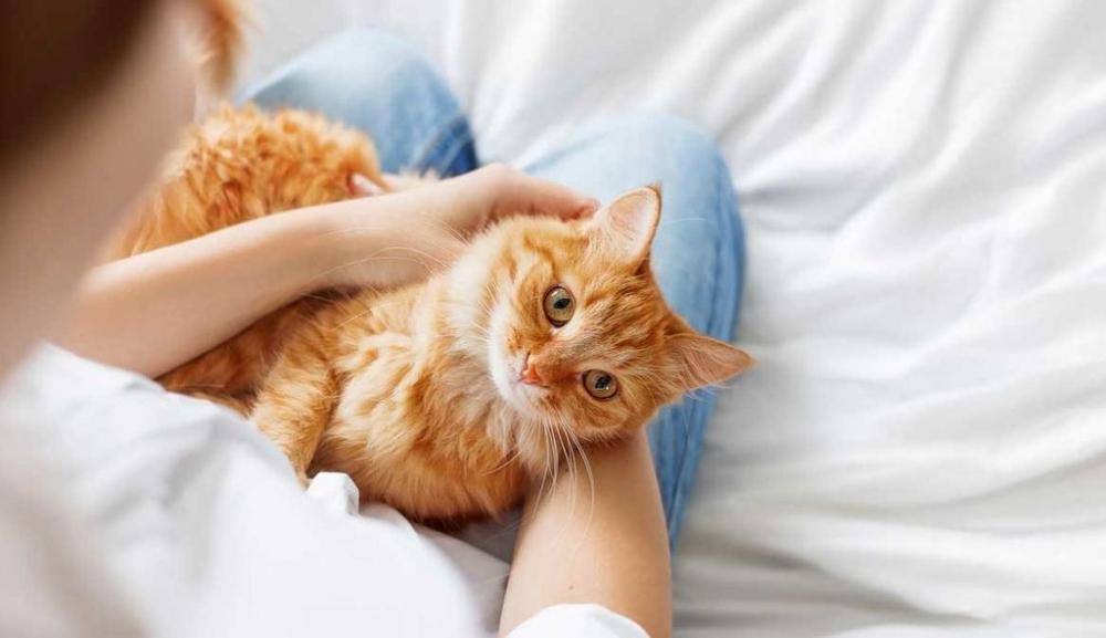 фип у кошек симптомы